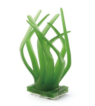 阳光草草型